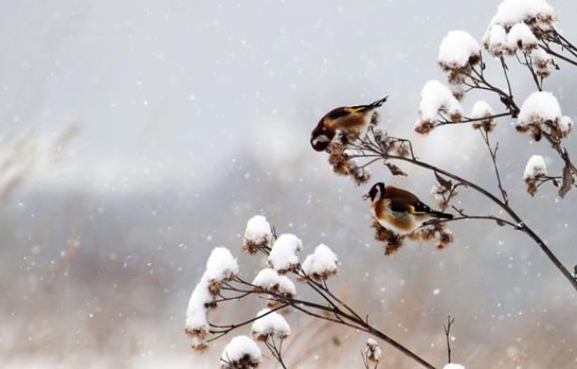 Vague de froid : suspension de la chasse aux migrateurs !