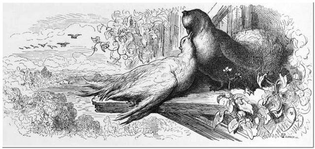 Ouverture Saison 2019/2020, Cailles et pigeons au balcon !